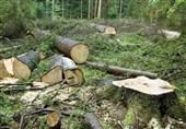 دوستداران محیط زیست: ساخت تلهکابین در جنگل ناهارخوران را متوقف کنید