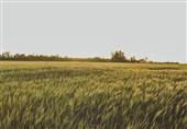 خسارتهای جبران ناپذیر خشکسالی به محصولات کشاورزی استان زنجان / آیا امسال شاهد افزایش واردات هستیم؟
