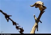 خشکسالی حیاتوحش استان ایلام را تهدید میکند/ دوستداران طبیعت برای حفظ گونههای جانوری وارد عمل شدند