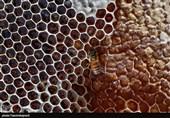 پرورش زنبور عسل در مراتع استان خراسان شمالی به روایت تصویر