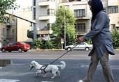 """ضرورت بررسی جامع محدودیت """"سگگردانی"""" در شورای شهر"""
