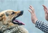 تبدیل شهرهای کشور به منطقه امن برای سگها و ناامن برای شهروندان و کودکان!