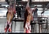 گزارش میدانی خبرنگار تسنیم از کشتارگاه دام سنندج ؛ آیا بر ذبح دام نظارت میشود؟+ تصاویر