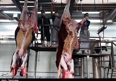 گزارش میدانی خبرنگار تسنیم از کشتارگاه دام سنندج؛ آیا بر ذبح دام نظارت میشود؟+تصاویر