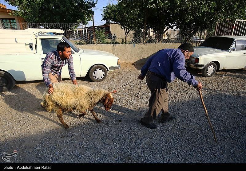 بازار فروش دام در آستانه عید قربان درهمدان