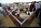 کشتار دامهای مولد بیتدبیری دولت در تامین نهادههای دامی را نشان داد