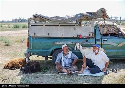بازار خرید و فروش گوسفند قربانی در آق قلا با توجه به شدت گرفتن بیماری کرونا نسبت به گذشته خلوت تر است