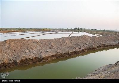 رهاسازی آب در سوسنگرد