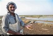 گزارش تسنیم از جاری شدن مجدد مایه حیات در دشت آزادگان/ آب رسید؛ ضرر کشاورزان را چه کسی جبران میکند؟ + فیلم