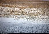 تالاب هشیلان در استان کرمانشاه جان تازه میگیرد / انتقال آب از سد گاوشان به تالاب
