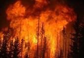 ترکیه در بحران بزرگترین آتش سوزیهای تاریخ خود؛ عملیات تروریستی یا گرمای هوا؟