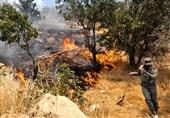 عزمی برای برخورد با «زغالگیری» از درختان بلوط زاگرس وجود ندارد
