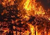 حواشی 107 آتش سوزی جنگل های ترکیه و درس عبرتی برای ایران- بخش پایانی
