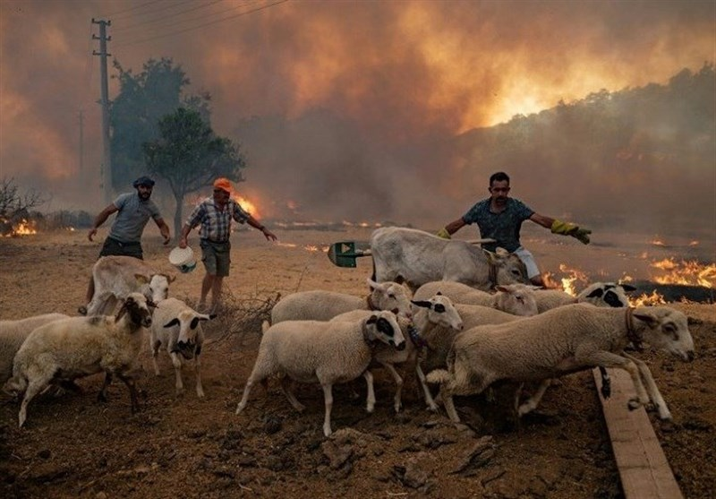 Deadly Wildfire Races toward Turkish Power Plant