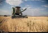 خشکسالی چوب لای چرخ آسیاب گندمکاران زنجانی گذاشت