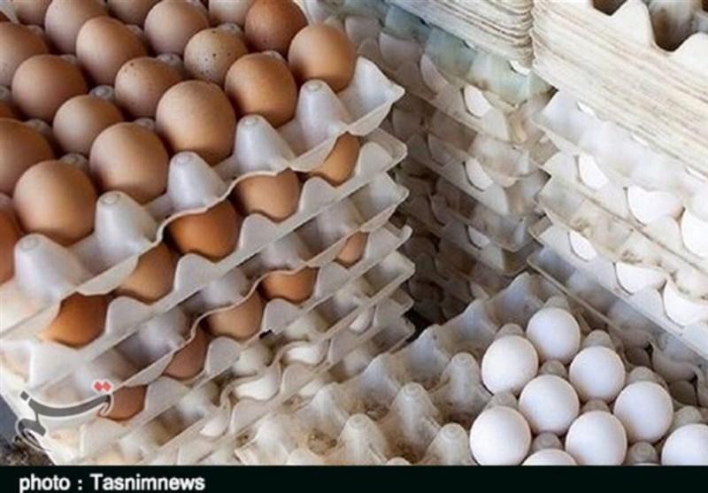 تخم مرغ دانهای 1440 تومان شد/کاهش قیمت با افزایش عرضه