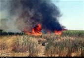 آتش به قلب تالاب هشیلان افتاد/ ارتفاع شعلههای آتش تا 4 متر میرسد + فیلم