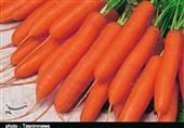 هویج رکورددار افزایش قیمت در مرداد شد