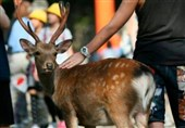 US Reports World's First Deer with COVID-19