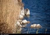 تالاب سد میل مغان میزبان 70 گونه پرنده مهاجر خواهد بود