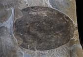 کشف فسیل یک حیوان عظیم و عجیب مربوط به نیم میلیارد سال پیش