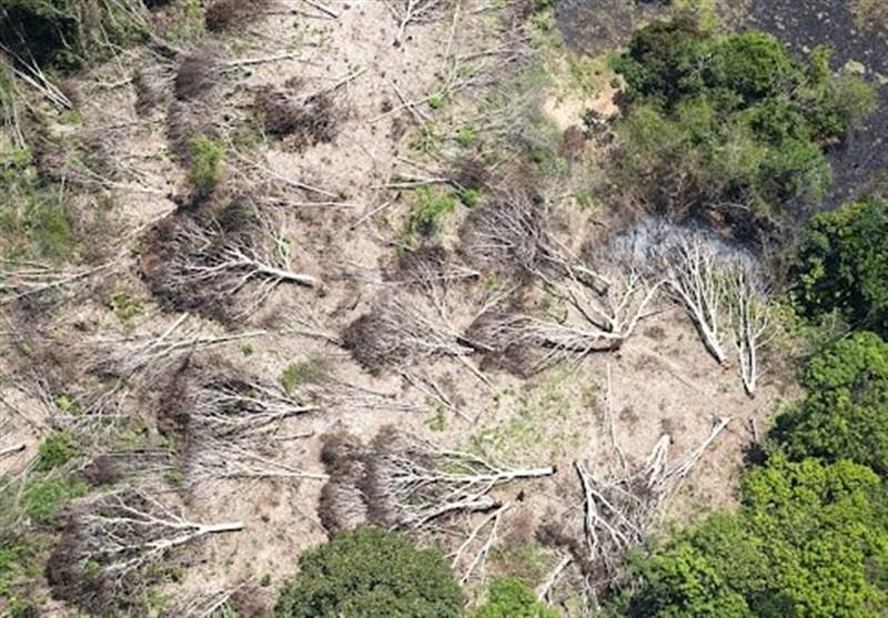 سالانه 30 هزار پرونده تخریب جنگلها و مراتع تشکیل میشود