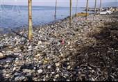 واکاوی علت آلودگی «سواحل شمال ایران»  باز هم پای مسافران در میان است / آغاز انقراض فوک خزری، ماهیان خاویاری و آبزیان