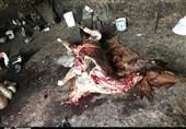 نیم تن گوشت اسب و الاغ غیرمجاز در تهران معدوم شد + تصاویر