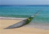 شناسایی خط لوله انتقال سوخت قاچاق به طول 1500 متر در سواحل جزیره قشم / 7 قاچاقچی سوخت بازداشت شدند