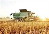 طرح جهش تولید دیمزارها در 40 هزار هکتار از اراضی استان ایلام اجرایی میشود