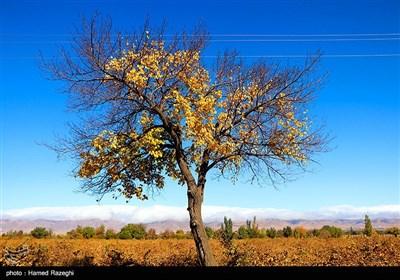 طبیعت پاییزی ابهر - زنجان
