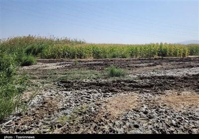 آبیاری مزارع با فاضلاب در حاشیه شیراز+تصاویر